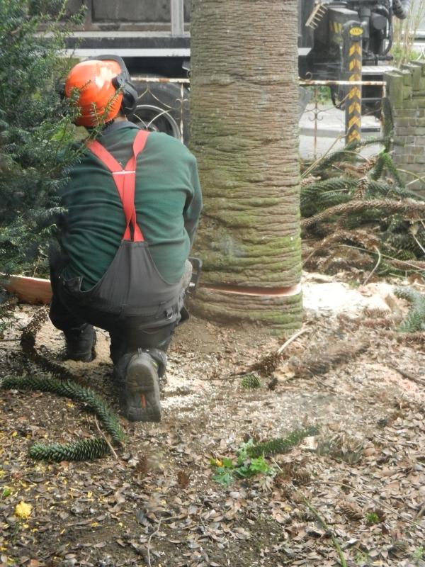 Alround hoveniers bedrijf voor alle voortkomende werkzaamheden in de tuin tuinier hovenier - Alle tuin ...